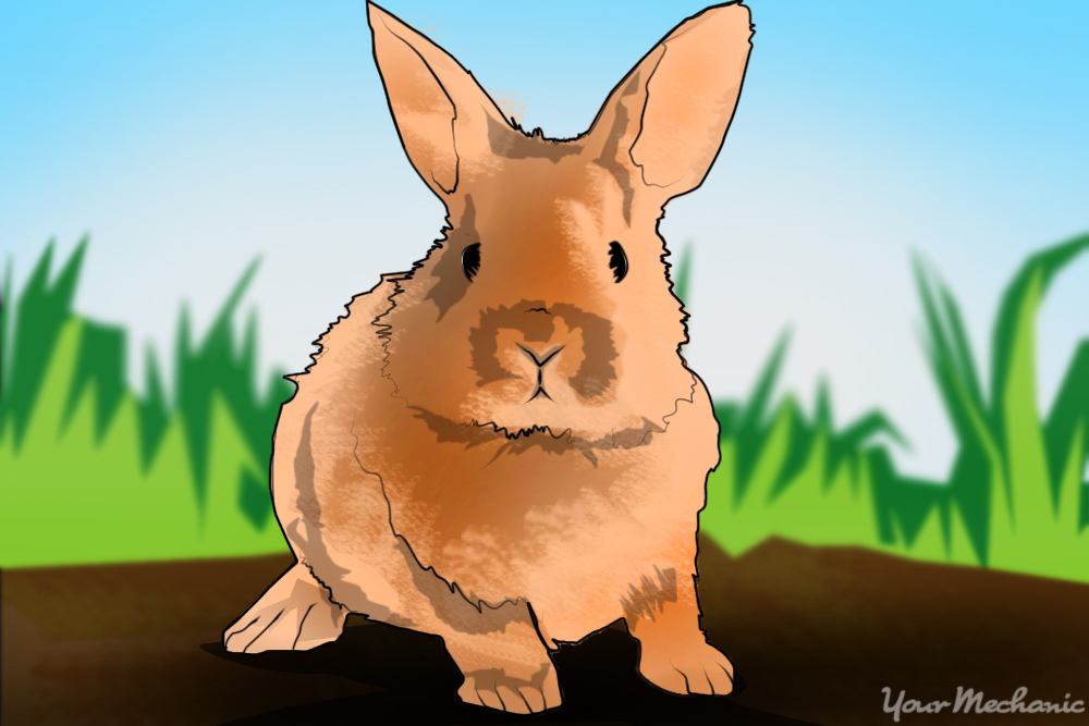 How to Stop Rabbits and Rodents from Damaging Your Vehicle