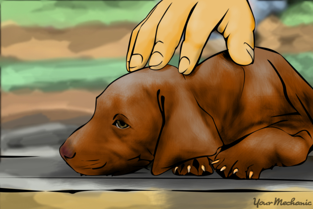 person petting puppy