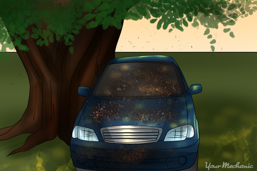 car parked under tree covered with sap