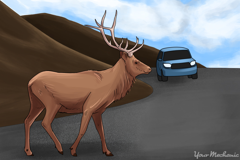 deer standing in middle of road