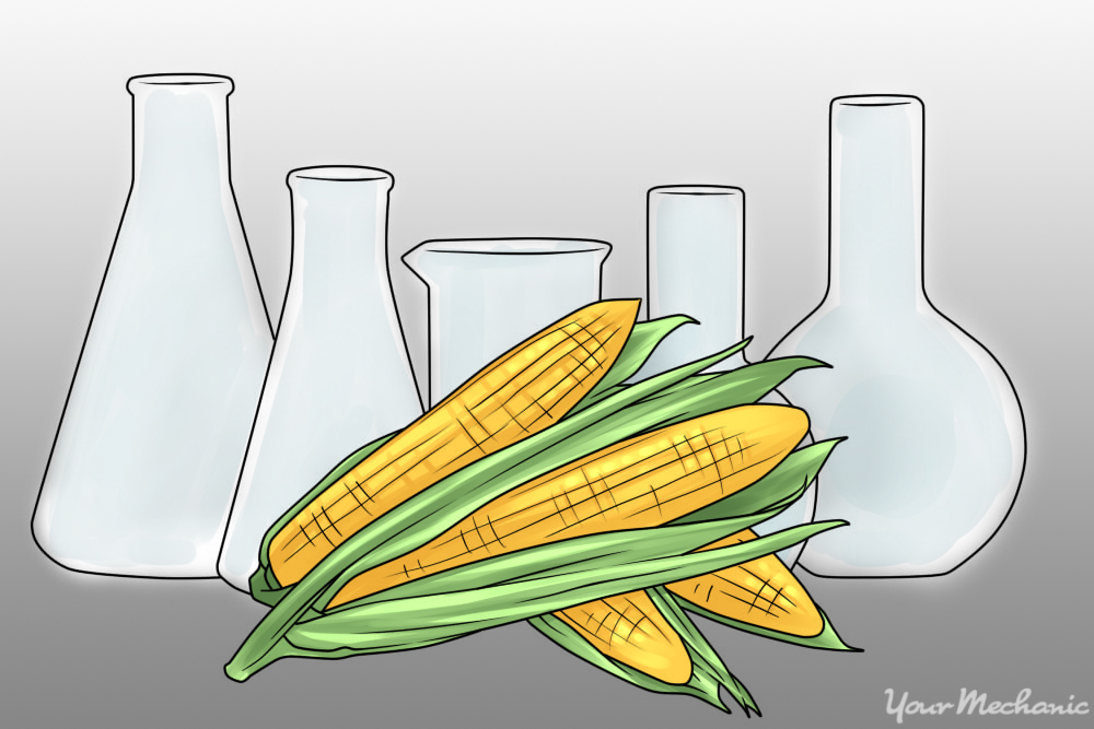 picture of corn and beakers