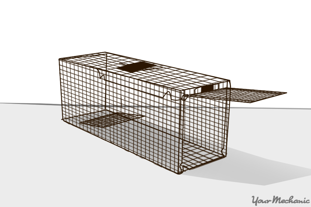non-kill cage trap
