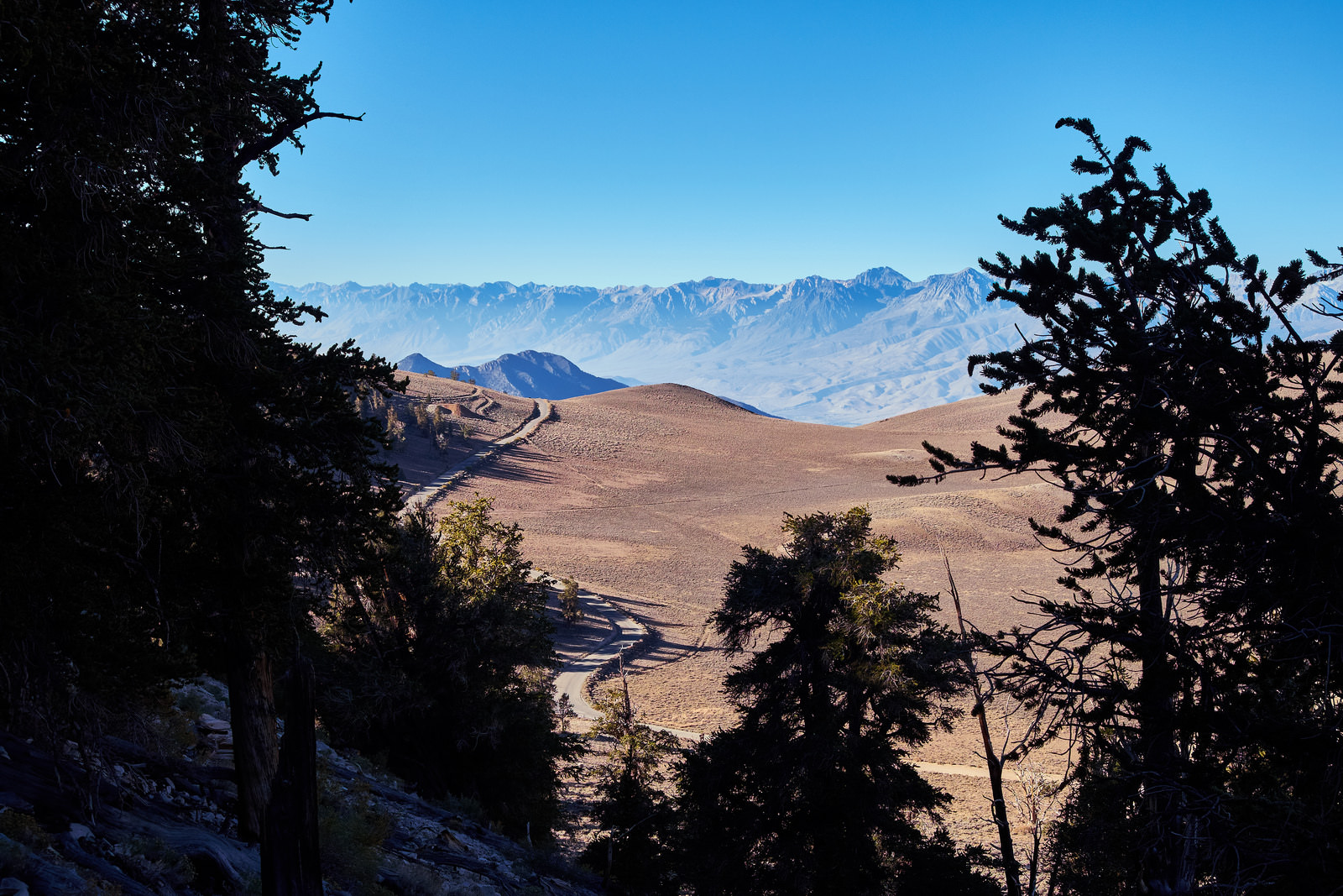 Ancient Bristlecone Scenic Byway Northern California