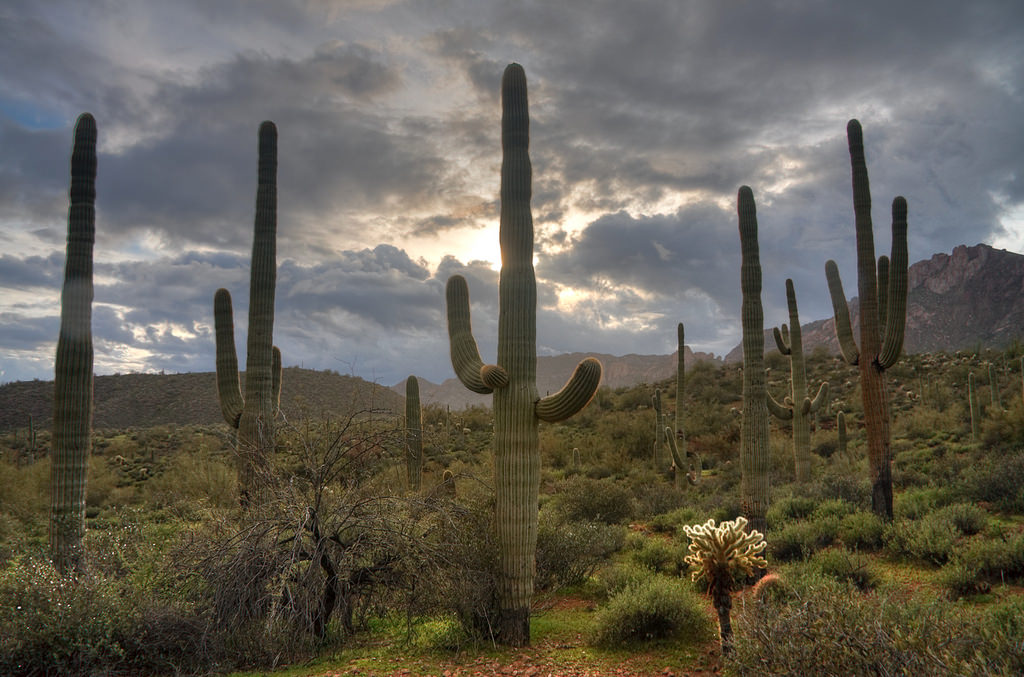 Tucson Mountain Park and Saguaro National Park Arizona
