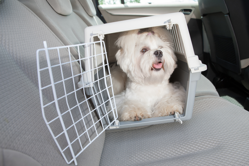 Good Quality Dog Crate for Road Trips