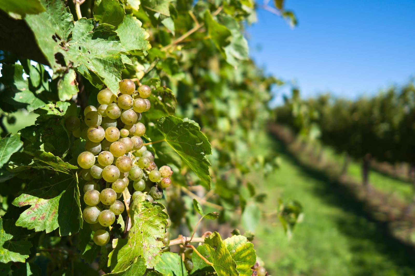 Iowa Wine Trail Iowa