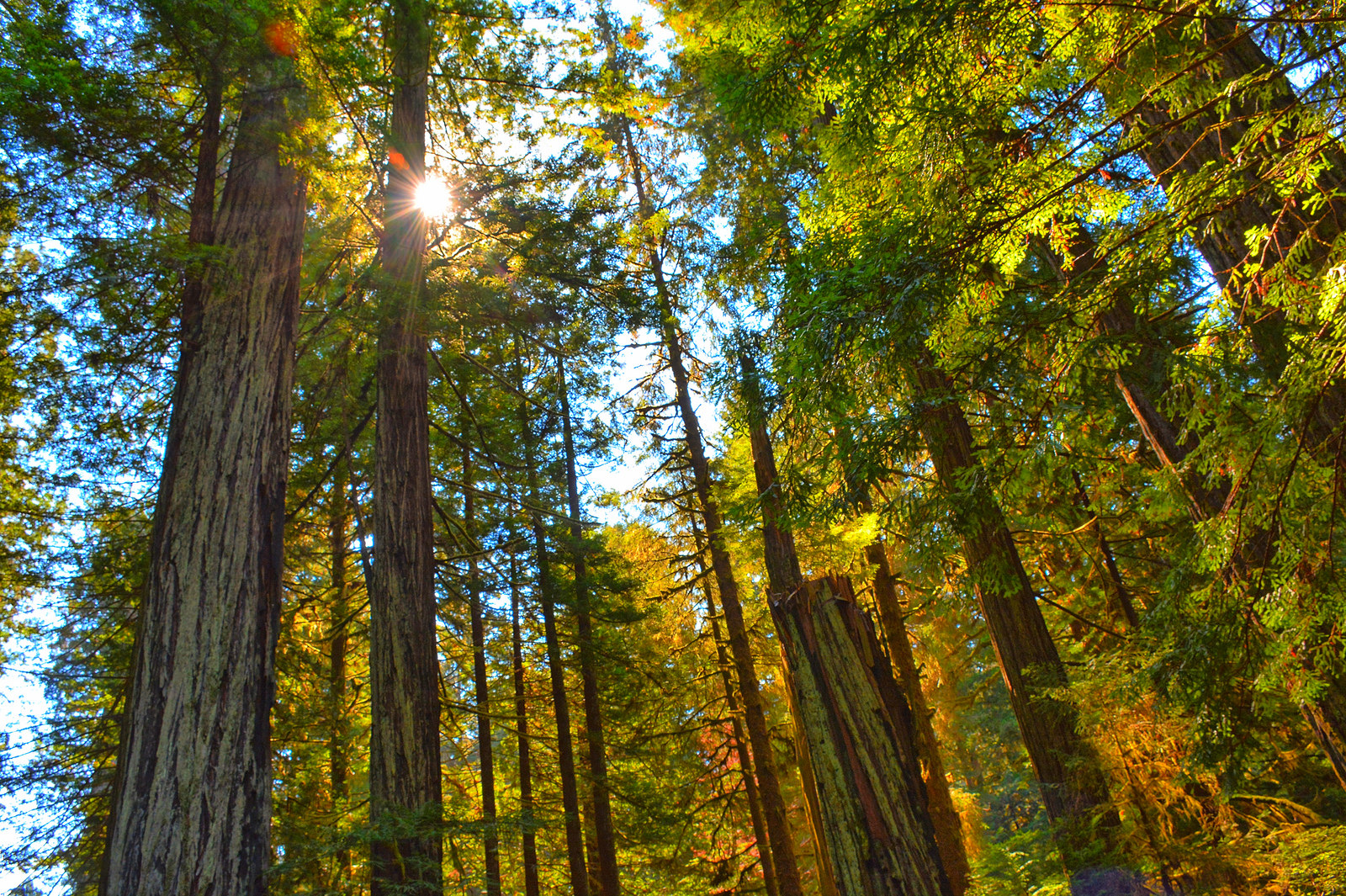 Redwood Highway Northern California