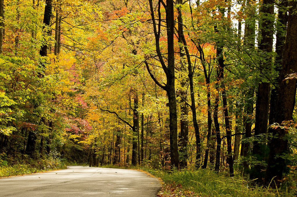Woodland Drive Tennessee