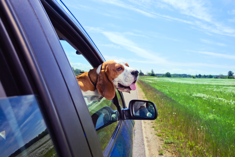 The Guidelines for Leaving Pets in a Car