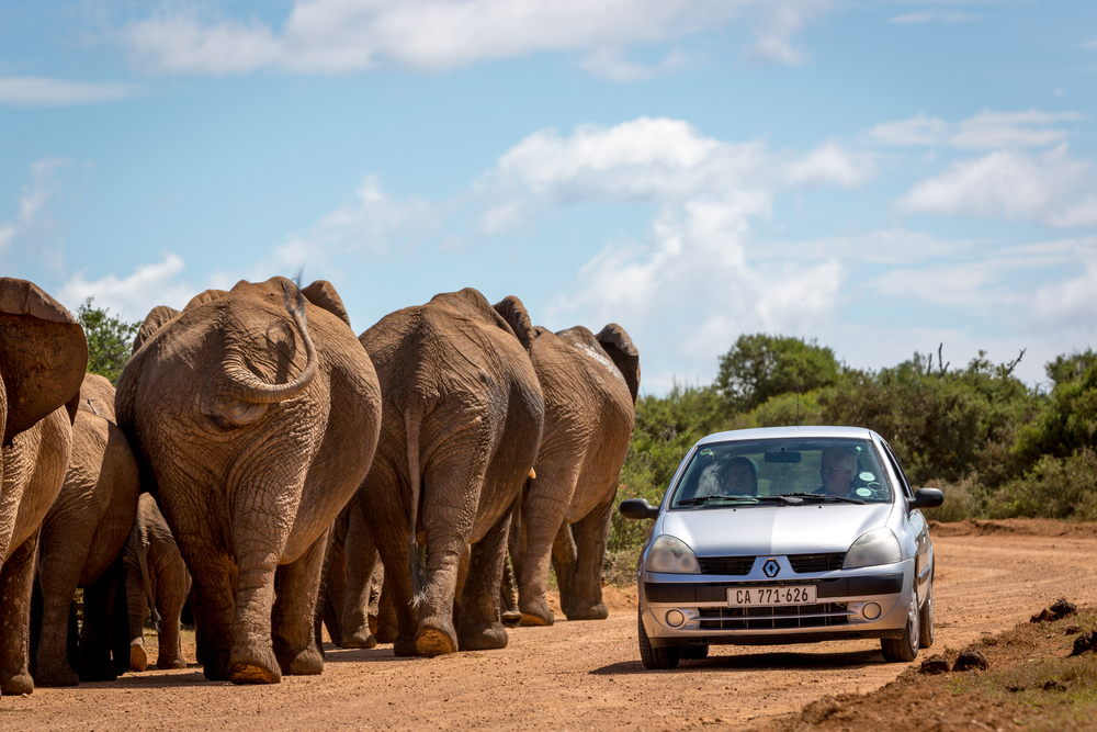 The Traveler's Guide to Driving in the South Africa