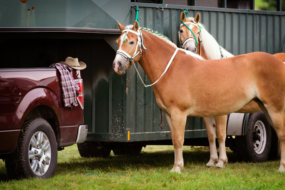 Vehicle for Horse Trailer