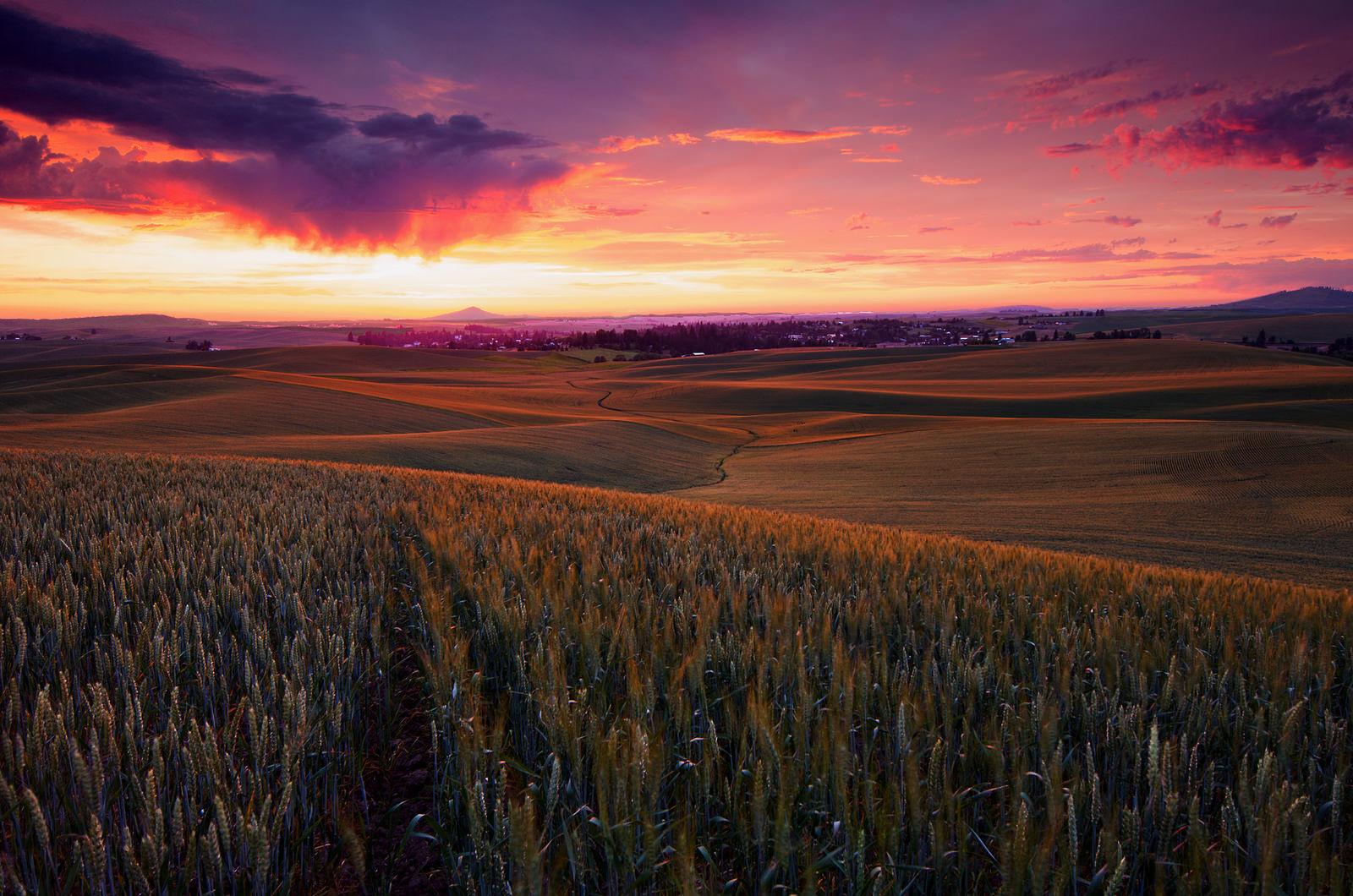 Palouse Country Washington