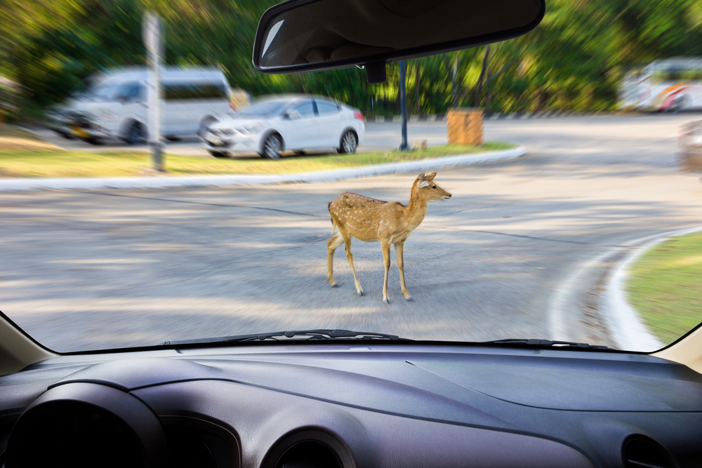 The States With the Highest Number of Deer Accidents